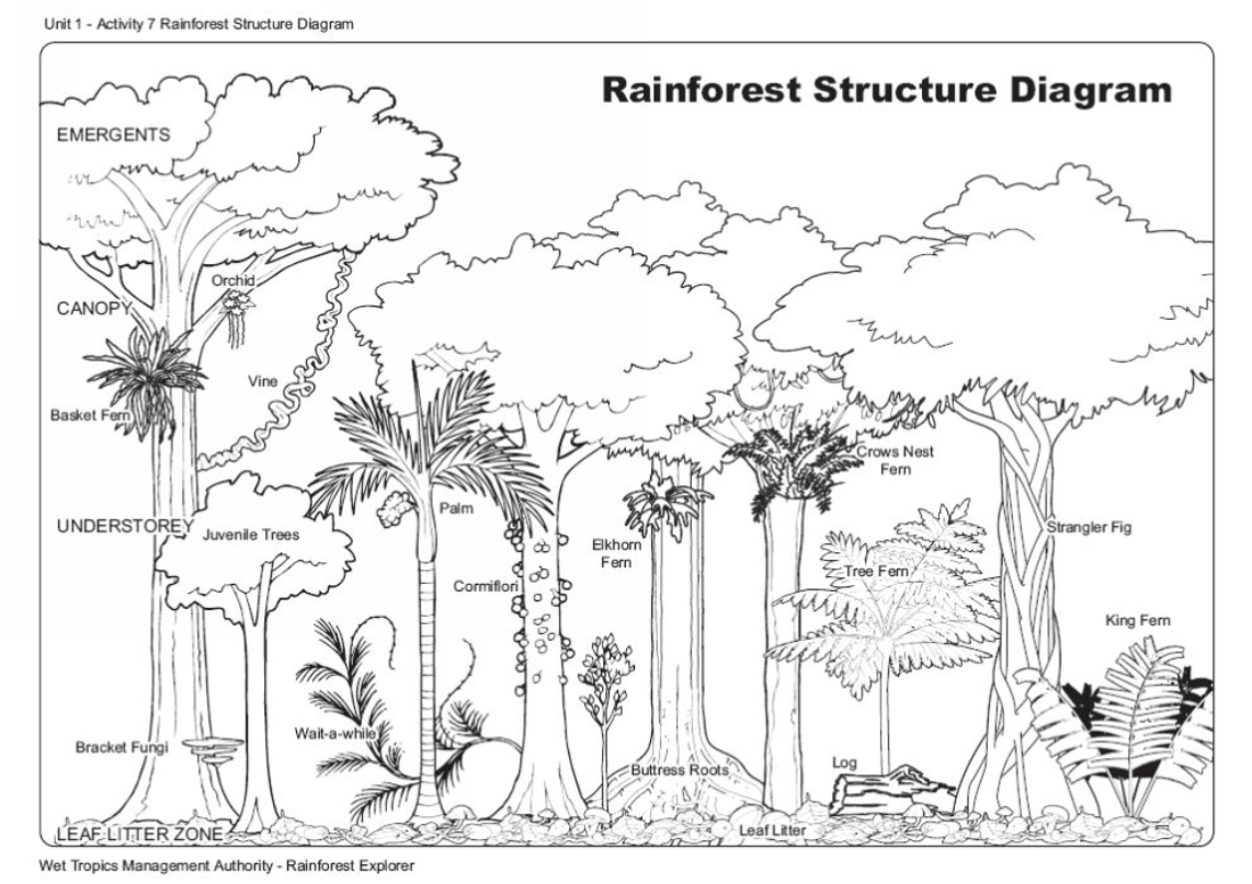 Forest Ecosystem Diagram
