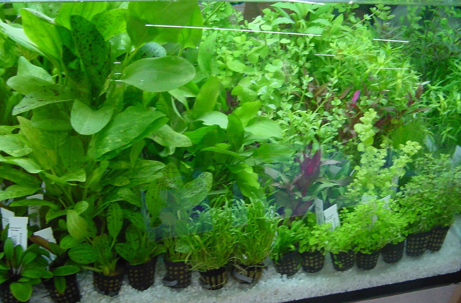 Aquarium Plant Store