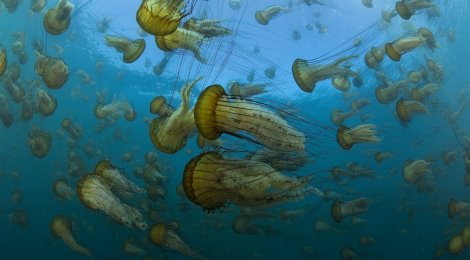 Unsere Ozeane - Die komplette TV-Serie  (Universum©Film)