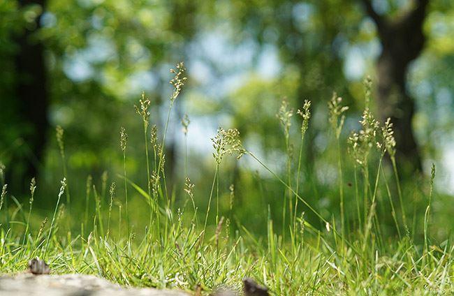 Samyang 50mm f1.4 AF Lens sample nature image