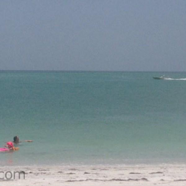 Boca Grande Sharks_24537