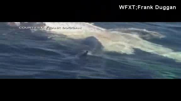 shark_197446