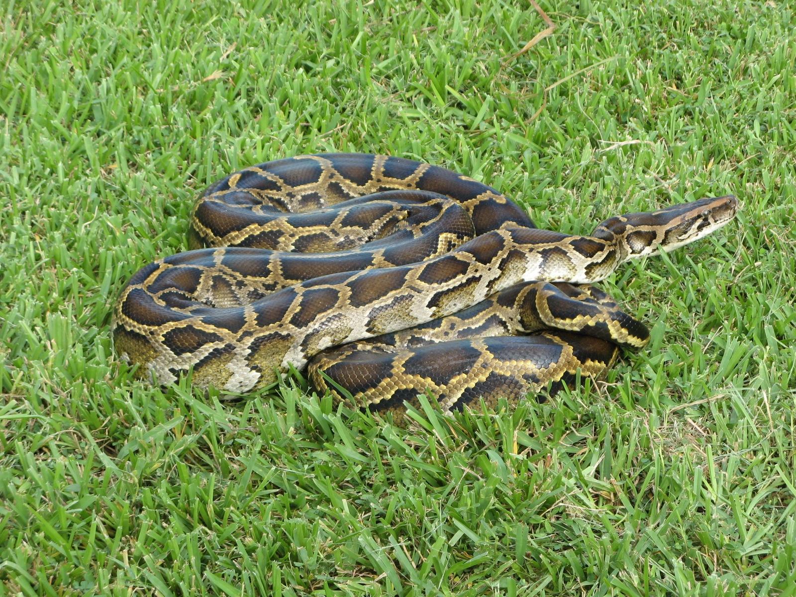 python_273320