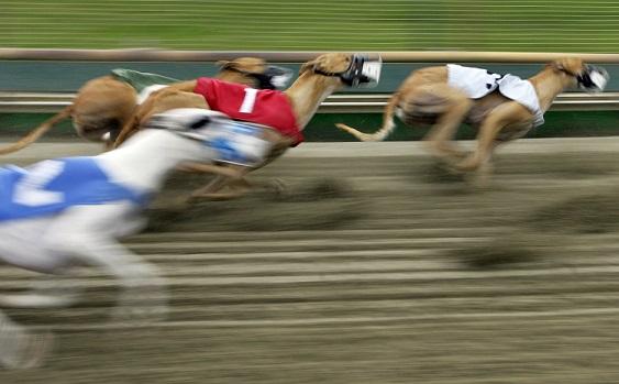 Greyhound Racing_357474