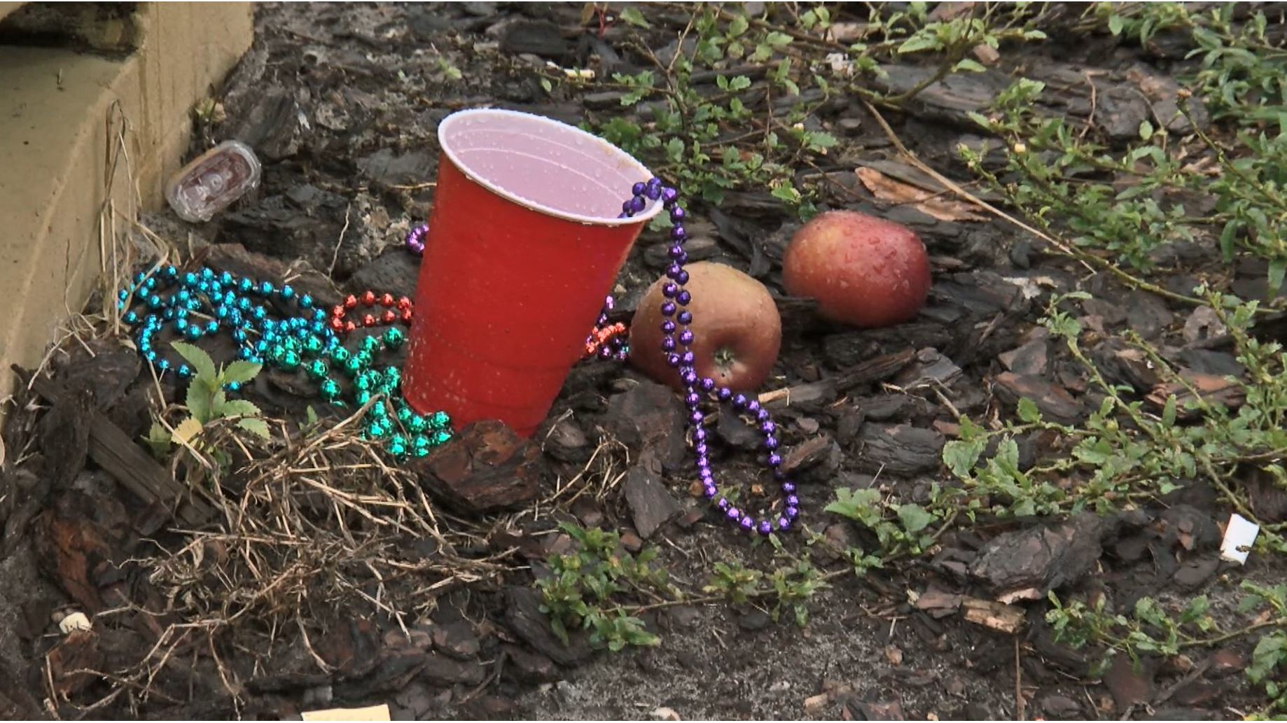 Dozens volunteer to clean up after Gasparilla