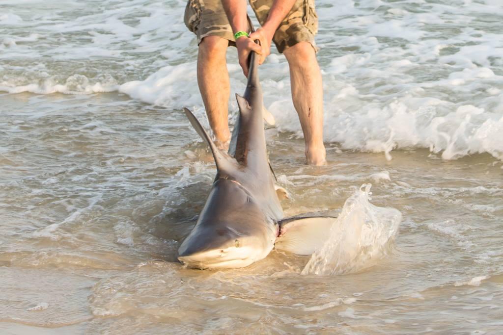 shark3_1554736113223-842137442.jpg