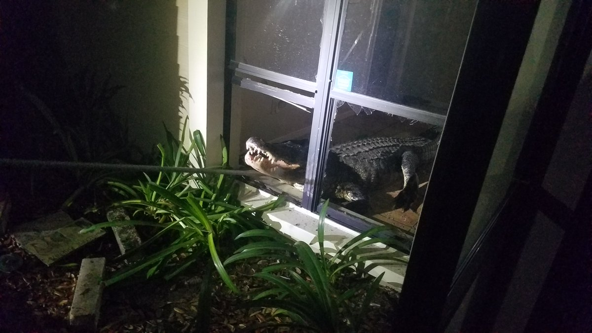 Alligator 3_1559303020512.jpg.jpg