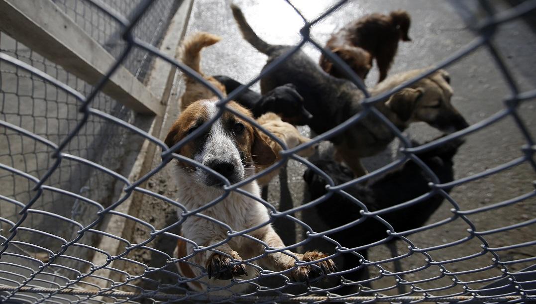 Serbia Prison Dogs_1557100120316