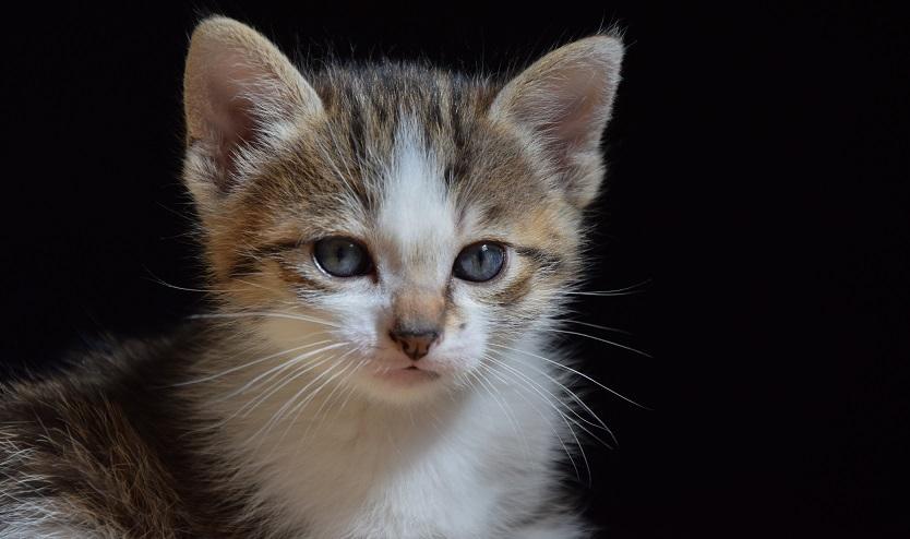 kittens_1532811427329.jpg