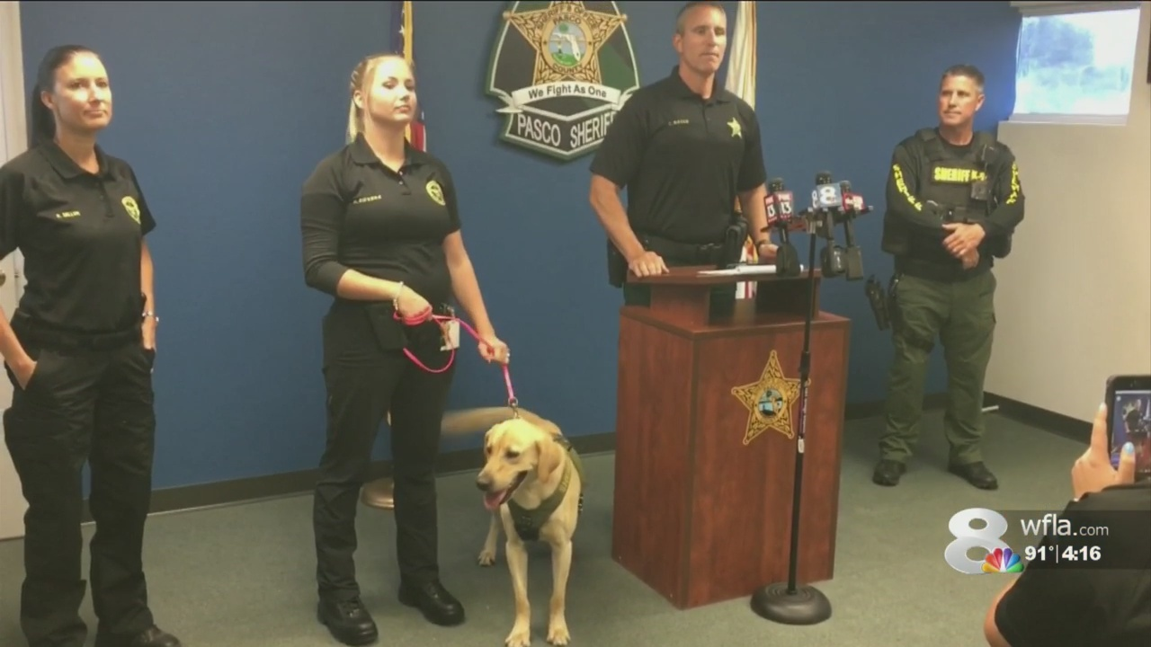 K-9 Phi makes debut with Pasco County Sheriff's Office
