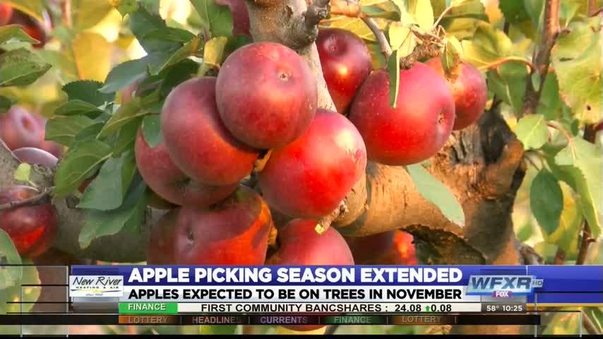 Ag Life- Apple picking season extended_51788411-159532