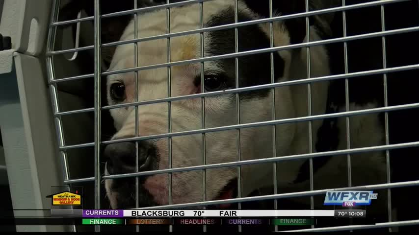 Animal hospital offers to board pets of those escaping abuse_88893094