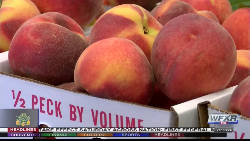 Ag Life- Peach season now underway_77604847
