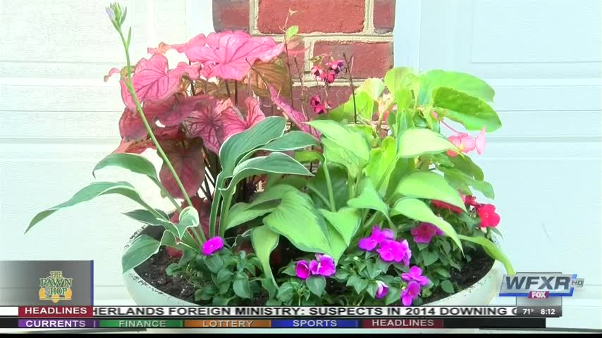 At Home- Planter tips with Abode Partners_11727020