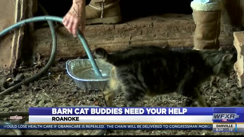 Barn Cat Buddies looking to put cats in good forever homes_04178650