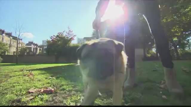 Dog_dies_in_Danville_of_heat_related_cau_0_20180620024134