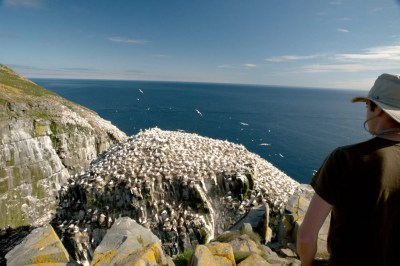 35 million seabirds at the Witless Bay Marine Ecological Reserve
