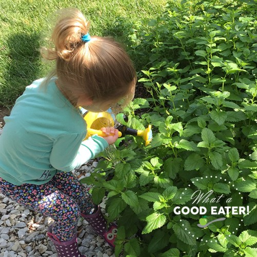 plant a toddler herb garden!