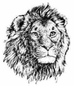 LHS_Lion
