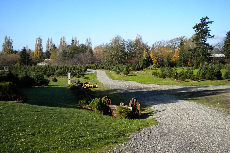 Bellingham Tree Farm Tomu0027s U Cut ...