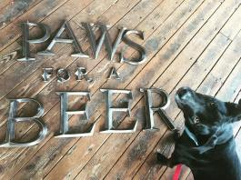 paws for a beer