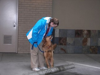 A Brigadoon dog demonstrates one of its skills by warning its companion of a curb in their path. Photo courtesy: Brigadoon Service Dogs.