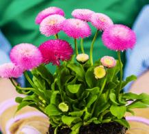 Cascade Cuts Plant Sale @ Cascade Cuts Nursery  | Bellingham | Washington | United States