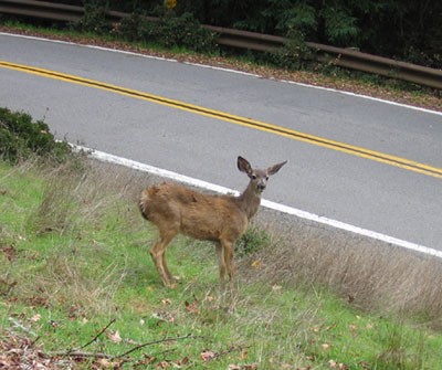 A deer on campus