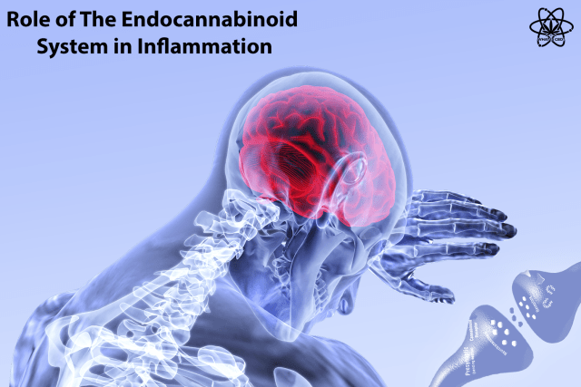 Role-of-the-endocannabinoid-system-in-inflammation