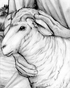 Passover Lamb for Sacrifice