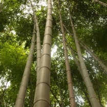kyoto-day-4-bamboo-grove_4104333402_o