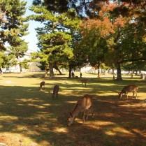 kyoto-day-5-deer-park-nara_4105759855_o