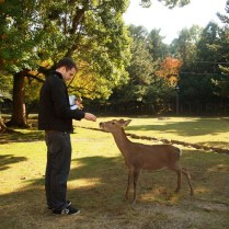 kyoto-day-5-feeding-the-deer_4105757651_o