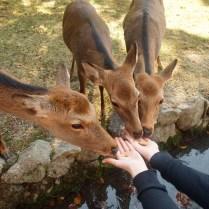 kyoto-day-5-feeding-the-deer_4105758321_o