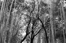 bamboo-grove_4117185862_o