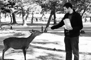 feeding-deer_4116416917_o