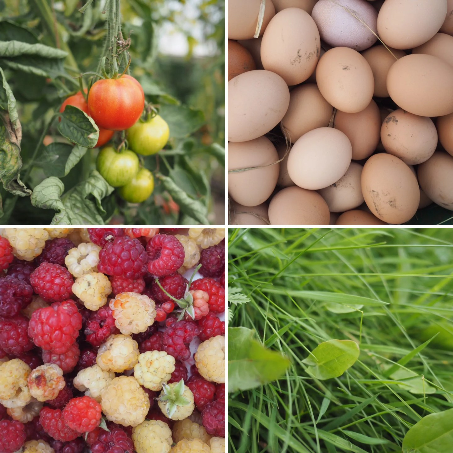 what-Lizzy-Loves-River-Cottage-fruit-eggs