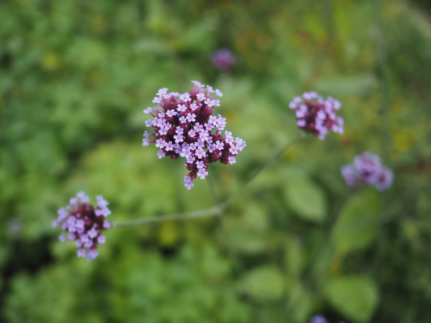 what-Lizzy-Loves-River-Cottage-flowers
