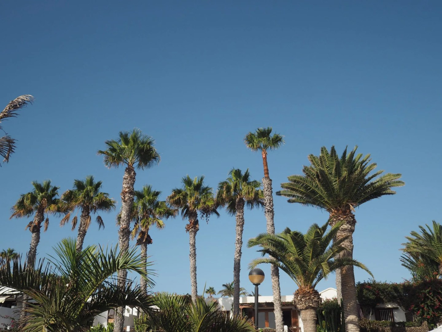 what lizzy loves lanzarote beach palm trees