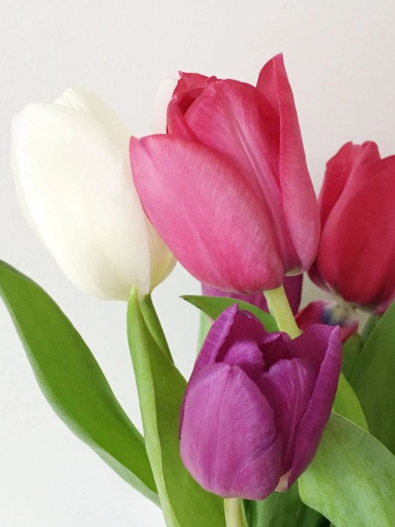 what-lizzy-loves-health-issues-tulips