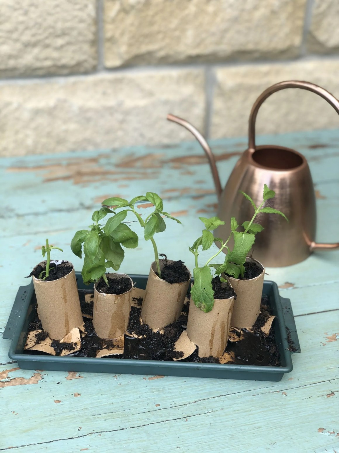 potting on propagated herb cuttings