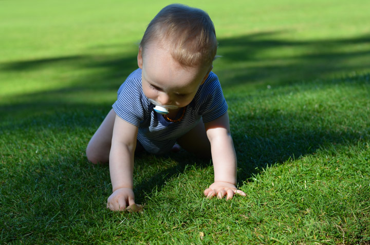 Noah exploring the grass...
