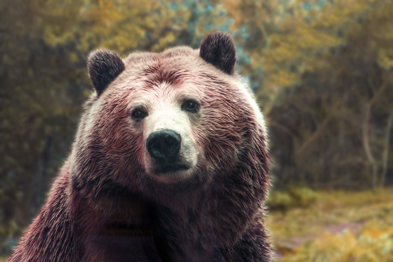 Symbolic Bear Meaning And Totem Insights On Whats Your Sign