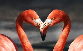 love symbol animal