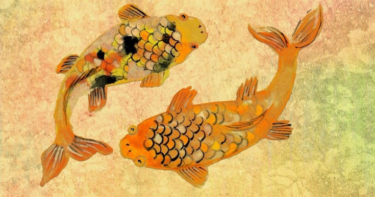 Animal Symbolism Koi Meaning On Whats Your Sign
