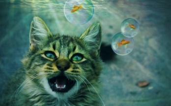 cat dream meaning