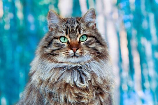 Risultati immagini per celtic animals cat
