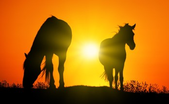 Celtic zodiac sign horse meaning in Celtic astrology