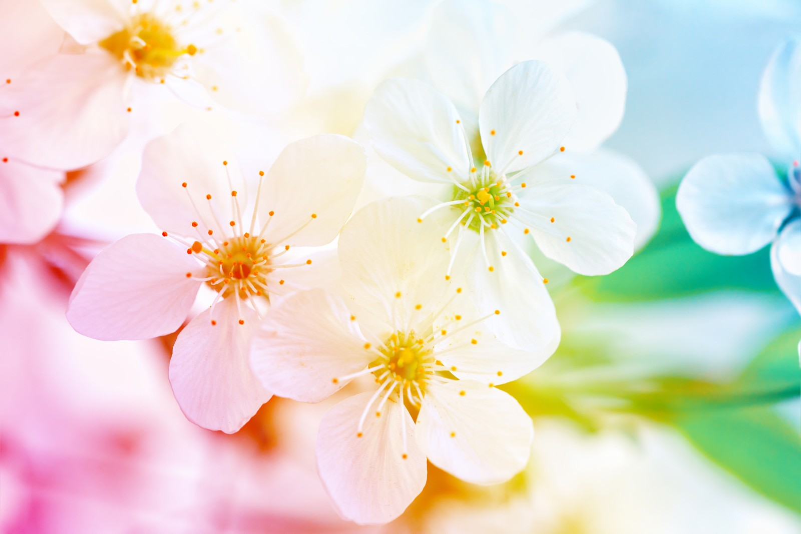 Cherry Blossom Tattoo Ideas And Meanings On Whats Your Sign