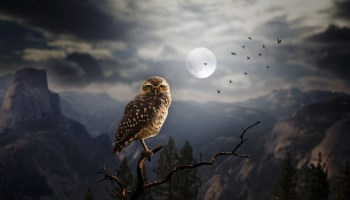 Types of dreams and interpreting dreams on whats your sign dream meanings animals intro malvernweather Image collections